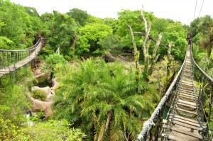 A Disney Vacation Must: Wild Africa Trek #MonkeyKingdomEvent