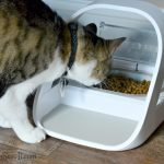 How The SureFeed Microchip Pet Feeder Can Keep Your Pets Healthier